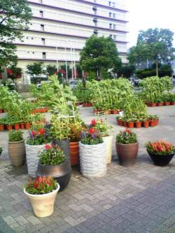 7月23日~8月3日 おもてなし・花風景「千の花広場(夏)~ひまわり~」