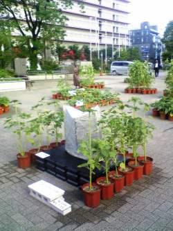 7月23日〜8月3日 おもてなし・花風景「千の花広場(夏)〜ひまわり〜」